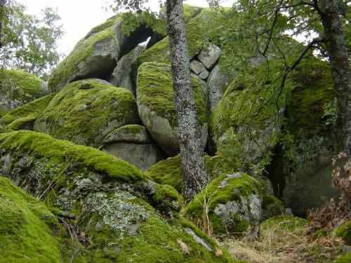 Biologia cah reino vegetal for Vegetal en anglais