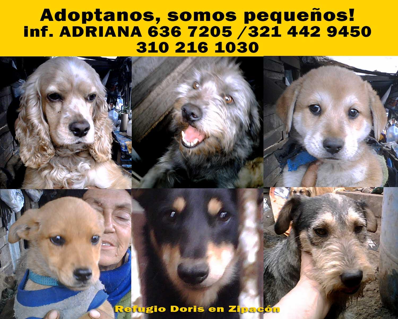 adoptanos_02