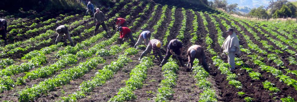 Agricultura colombiana for 4 usos del suelo en colombia