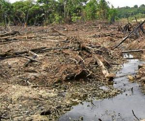 120 mil hect reas de bosque afectadas por deforestaci n en for Hipotecas afectadas por el suelo