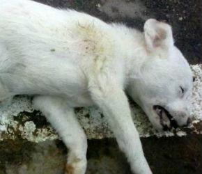 bucaramanga-denuncia-envenenamiento-perros