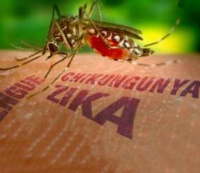 Colombia vigila posibles complicaciones relacionadas con el virus del zika