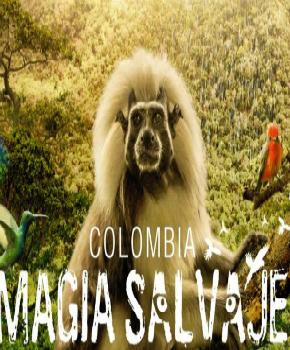 """La película colombiana """"Magia Salvaje"""" rompe récord en taquilla"""
