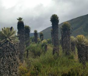 Dos nuevos parques naturales en Boyacá